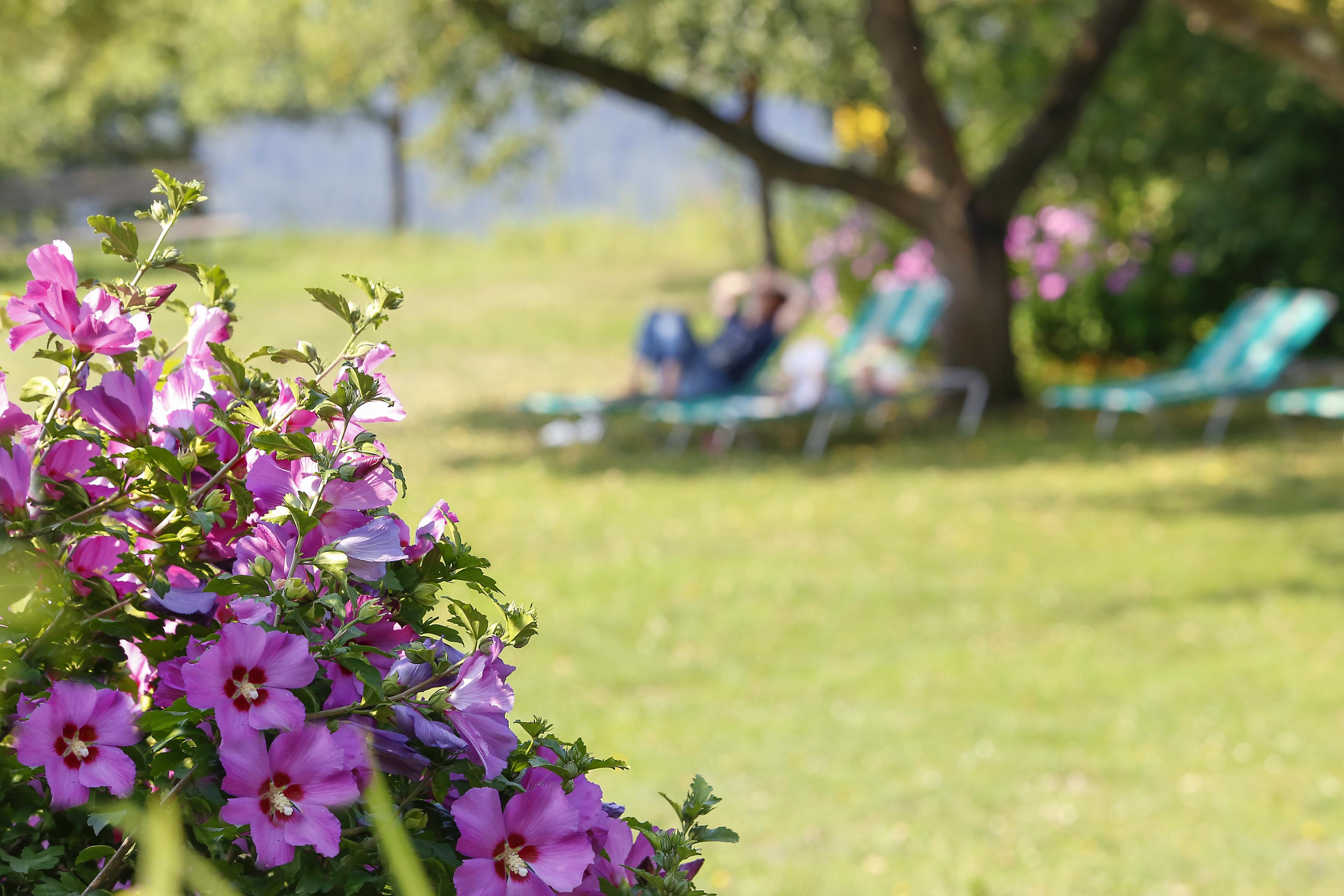 Relaxen im Höhenwirtgarten