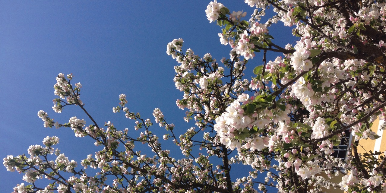Frühling beim Hoehenwirt
